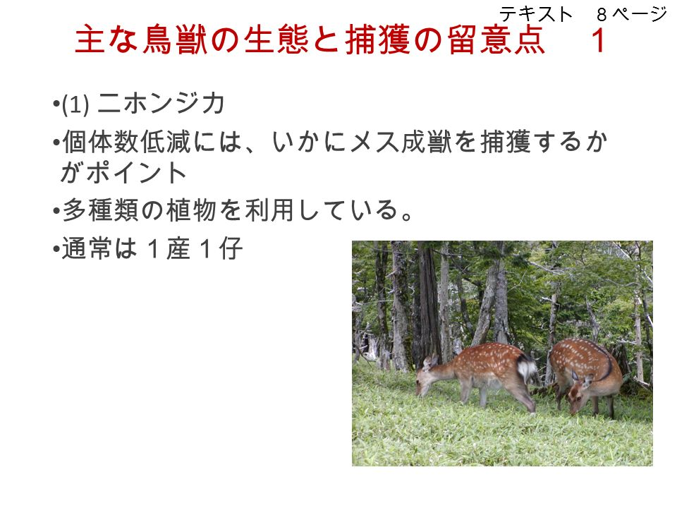 主な鳥獣の生態と捕獲の留意点 1 (1) ニホンジカ 個体数低減には、いかにメス成獣を捕獲するか がポイント 多種類の植物を利用している。 通常は1産1仔 テキスト 8ページ