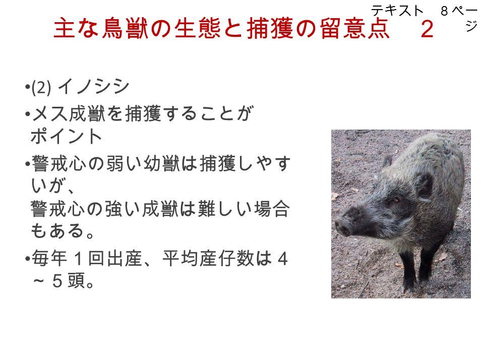 主な鳥獣の生態と捕獲の留意点 2 (2) イノシシ メス成獣を捕獲することが ポイント 警戒心の弱い幼獣は捕獲しやす いが、 警戒心の強い成獣は難しい場合 もある。 毎年1回出産、平均産仔数は4 ~5頭。 テキスト 8ペー ジ