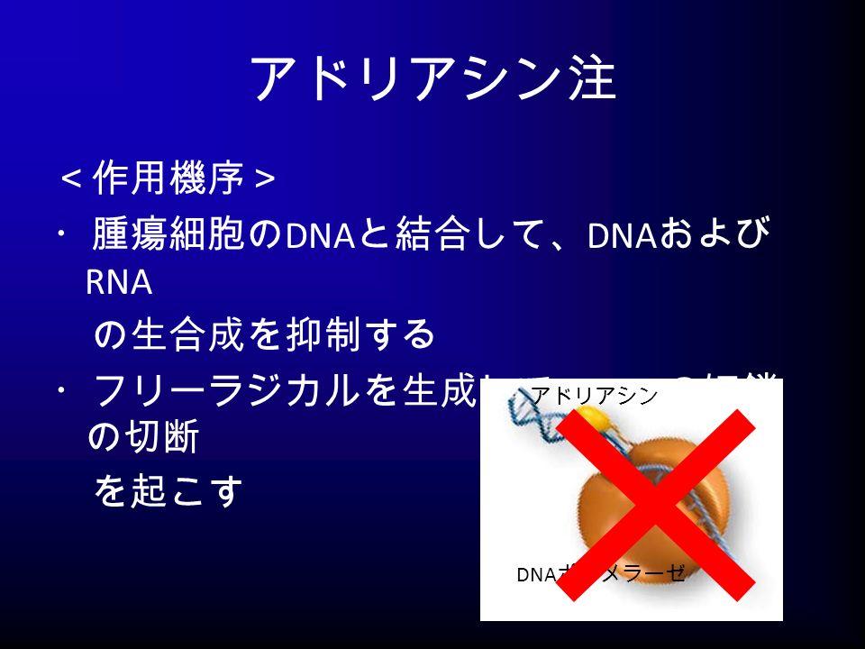 アドリアシン注 <作用機序> ・腫瘍細胞の DNA と結合して、 DNA および RNA の生合成を抑制する ・フリーラジカルを生成して、 DNA の短鎖 の切断 を起こす アドリアシン DNA ポリメラーゼ