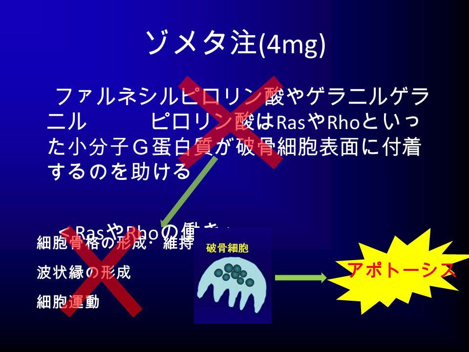 ゾメタ注 (4mg) ファルネシルピロリン酸やゲラニルゲラ ニル ピロリン酸は Ras や Rho といっ た小分子G蛋白質が破骨細胞表面に付着 するのを助ける < Ras や Rho の働き> 細胞骨格の形成・維持 波状縁の形成 細胞運動 アポトーシス