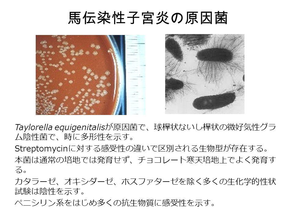 馬伝染性子宮炎の原因菌 Taylorella equigenitalis が原因菌で、球桿状ないし桿状の微好気性グラ ム陰性菌で、時に多形性を示す。 Streptomycin に対する感受性の違いで区別される生物型が存在する。 本菌は通常の培地では発育せず、チョコレート寒天培地上でよく発育す る。 カタラーゼ、オキシダーゼ、ホスファターゼを除く多くの生化学的性状 試験は陰性を示す。 ペニシリン系をはじめ多くの抗生物質に感受性を示す。