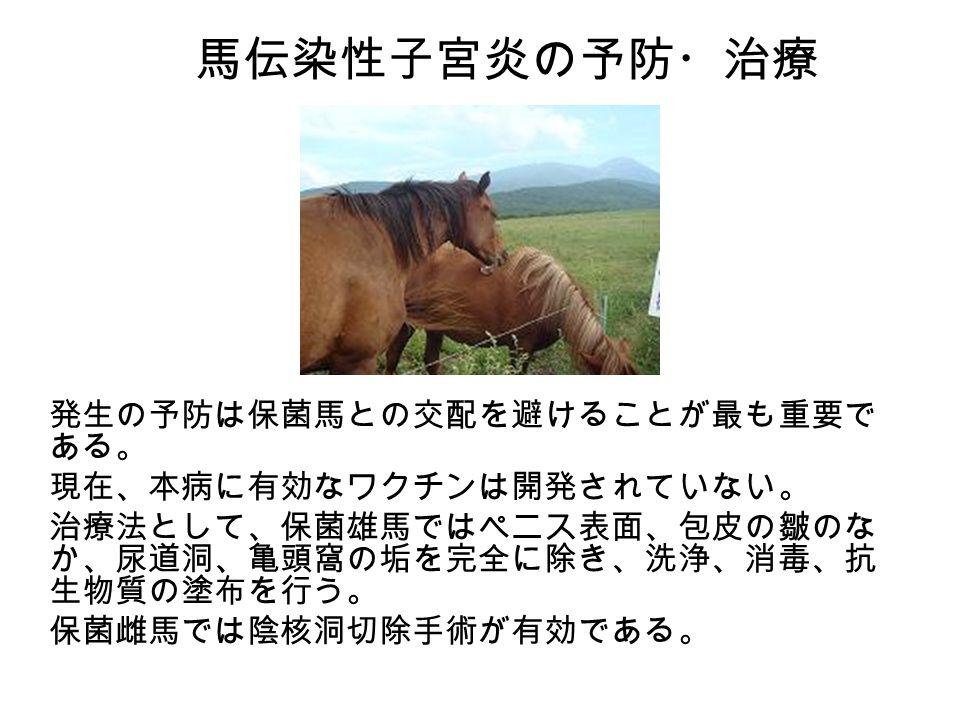 馬伝染性子宮炎の予防・治療 発生の予防は保菌馬との交配を避けることが最も重要で ある。 現在、本病に有効なワクチンは開発されていない。 治療法として、保菌雄馬ではペニス表面、包皮の皺のな か、尿道洞、亀頭窩の垢を完全に除き、洗浄、消毒、抗 生物質の塗布を行う。 保菌雌馬では陰核洞切除手術が有効である。