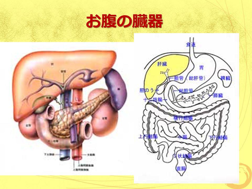 お腹の臓器