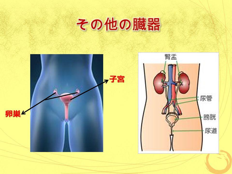 子宮 卵巣