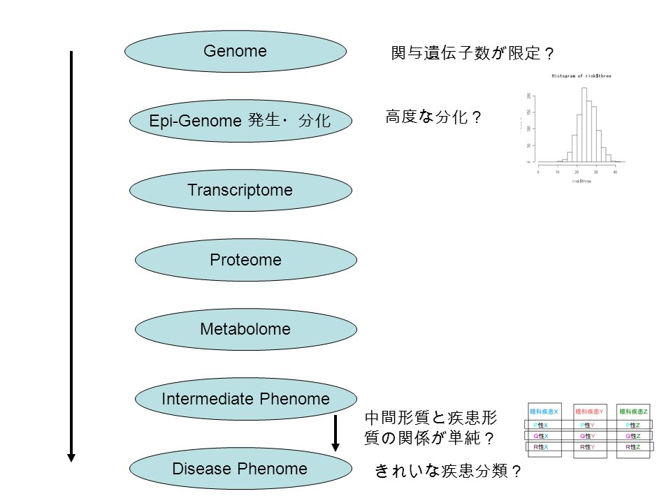 Genome Epi-Genome 発生・分化 Transcriptome Proteome Metabolome Intermediate Phenome Disease Phenome 高度な分化? 中間形質と疾患形 質の関係が単純? きれいな疾患分類? 関与遺伝子数が限定?