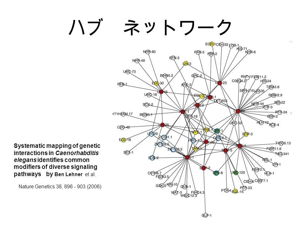 ハブ ネットワーク Nature Genetics 38, 896 - 903 (2006) Systematic mapping of genetic interactions in Caenorhabditis elegans identifies common modifiers of diverse signaling pathways by Ben Lehner et al.