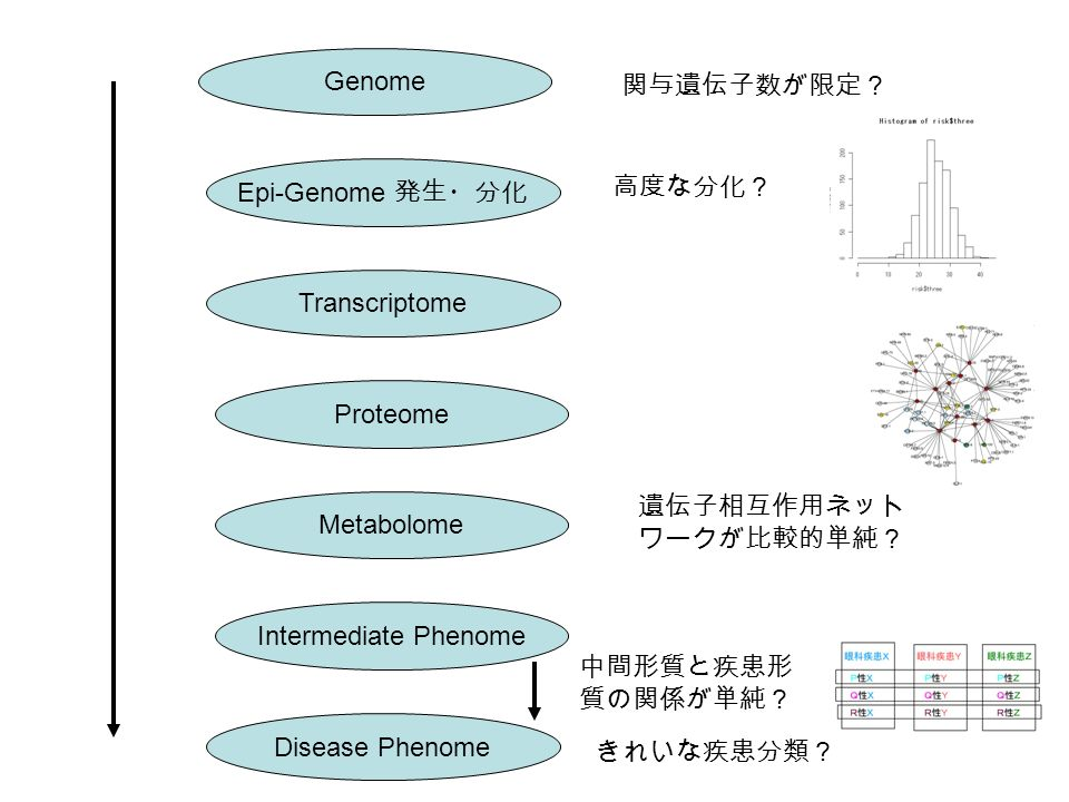 Genome Epi-Genome 発生・分化 Transcriptome Proteome Metabolome Intermediate Phenome Disease Phenome 高度な分化? 中間形質と疾患形 質の関係が単純? きれいな疾患分類? 関与遺伝子数が限定? 遺伝子相互作用ネット ワークが比較的単純?