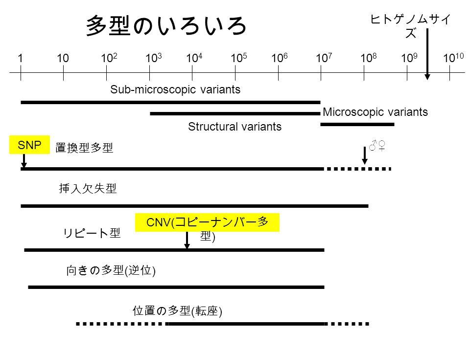 1010 2 10 3 10 4 10 5 10 6 10 7 10 8 10 910 1 Sub-microscopic variants Structural variants Microscopic variants ヒトゲノムサイ ズ 置換型多型 SNP 挿入欠失型 リピート型 向きの多型 ( 逆位 ) 位置の多型 ( 転座 ) CNV( コピーナンバー多 型 ) ♂♀ 多型のいろいろ
