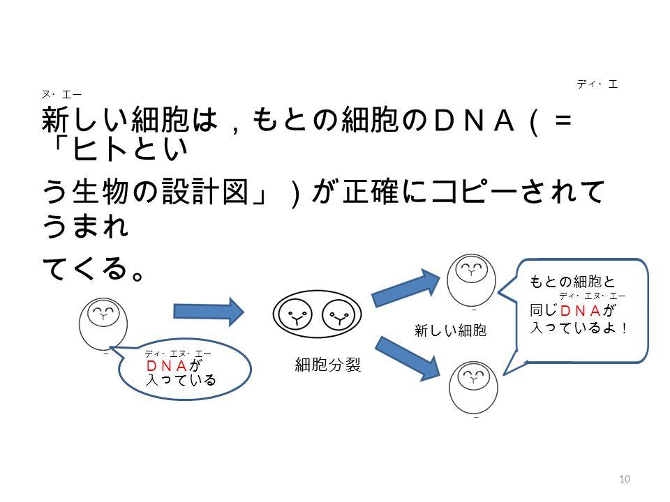 もとの細胞と ディ・エヌ・エー 同じDNAが 入っているよ! ディ・エ ヌ・エー 新しい細胞は,もとの細胞のDNA(= 「ヒトとい う生物の設計図」)が正確にコピーされて うまれ てくる。 10 細胞分裂 新しい細胞 ディ・エヌ・エー DNAが 入っている