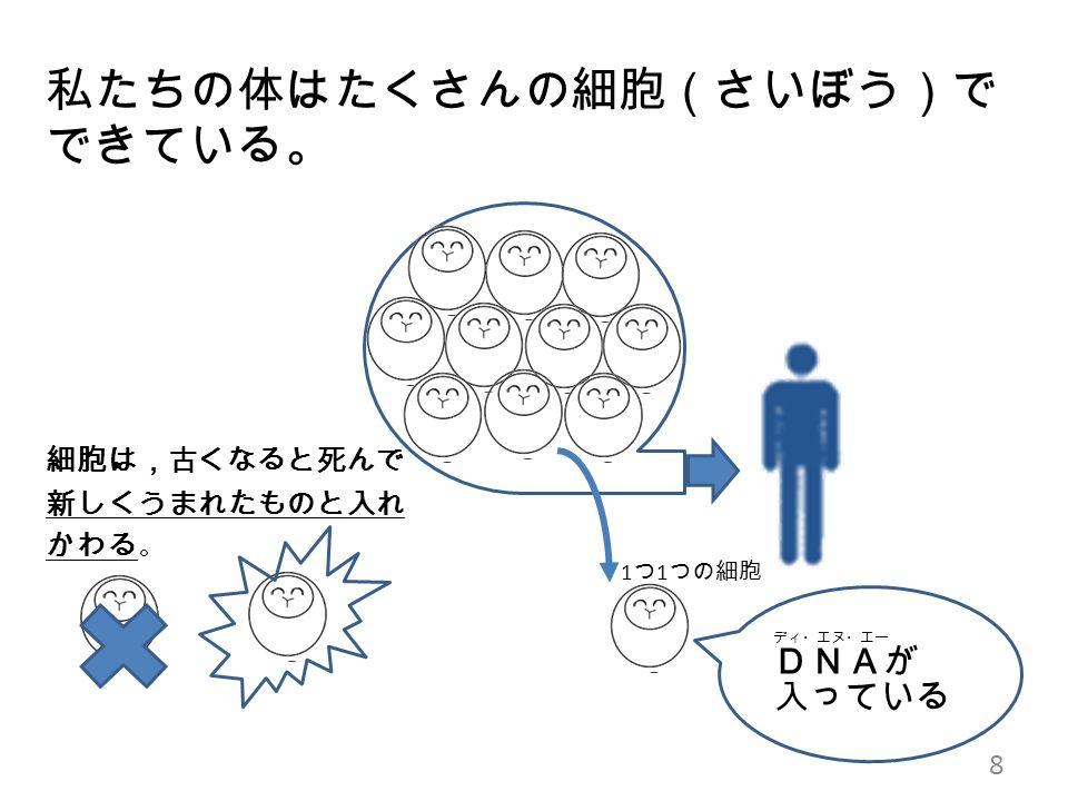 私たちの体はたくさんの細胞(さいぼう)で できている。 細胞は,古くなると死んで 新しくうまれたものと入れ かわる 。 8 1 つ 1 つの細胞 ディ・エヌ・エー DNAが 入っている