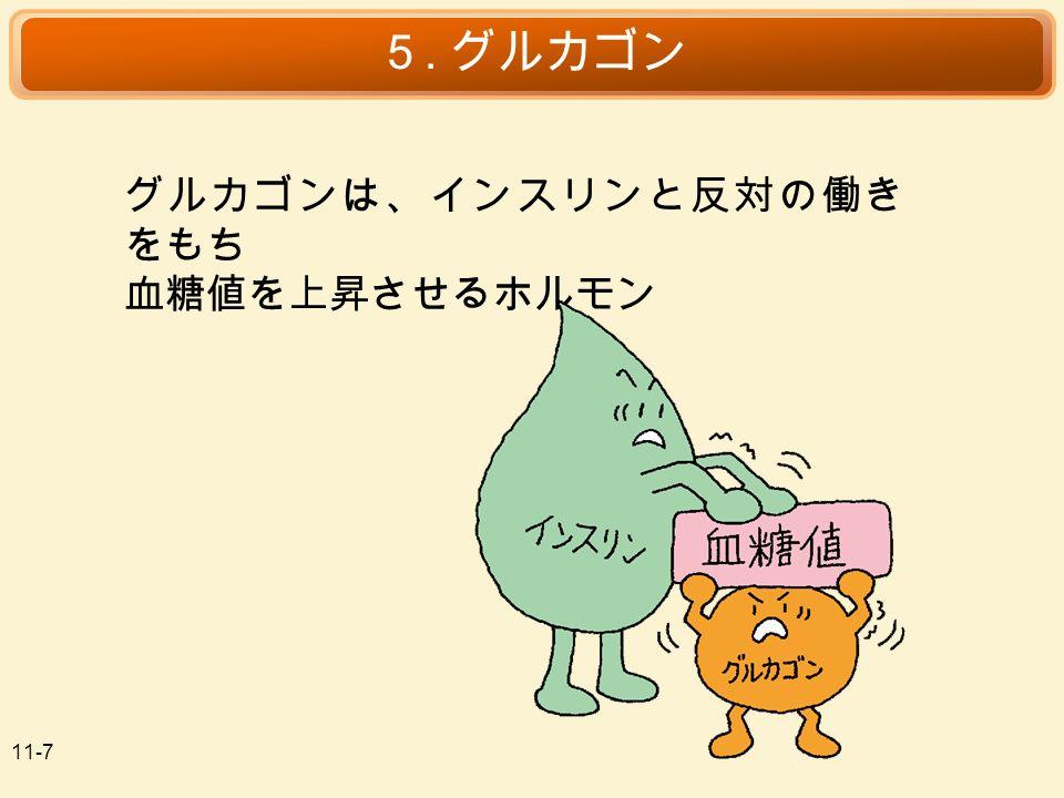11-7 5. グルカゴン グルカゴンは、インスリンと反対の働き をもち 血糖値を上昇させるホルモン